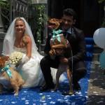 Dogs Sitter per Matrimonio