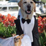 dog_wedding